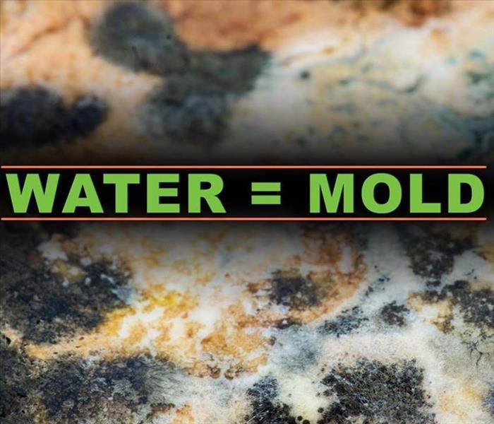 Mold And Water
